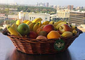 Wicker basket of fresh fruit with grapes